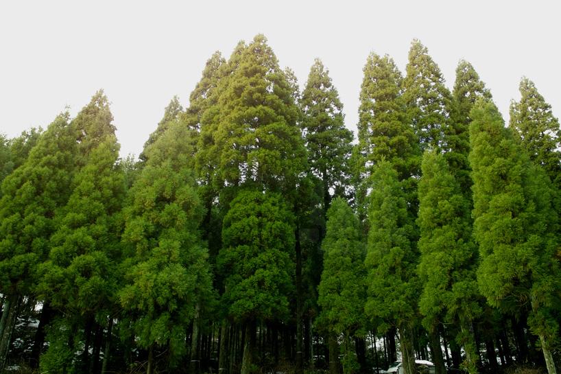 bril-coniferous-clock-sugidama-sake-designboom-10