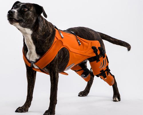 galia weiss设计的 hipster 使患有髋关节发育不良的狗狗复原