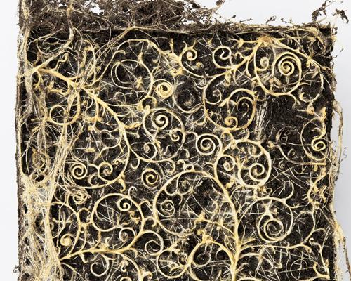 如何让植物的根长成美丽的图案