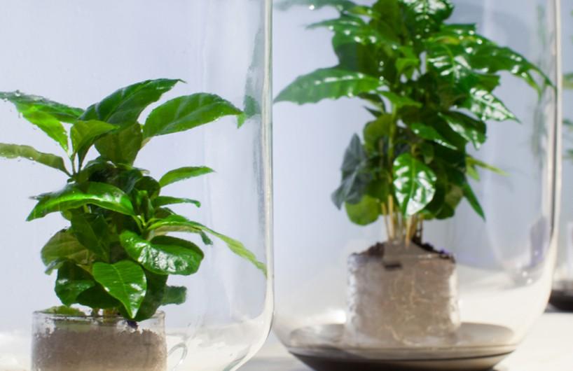 可自动浇水的智能植物花架Pikaplant One