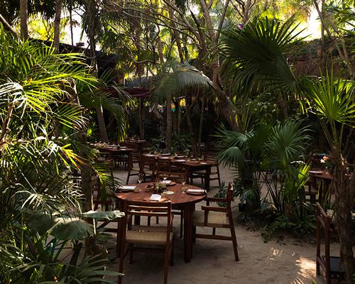 墨西哥NOMA置身于丘陵的丛林环境