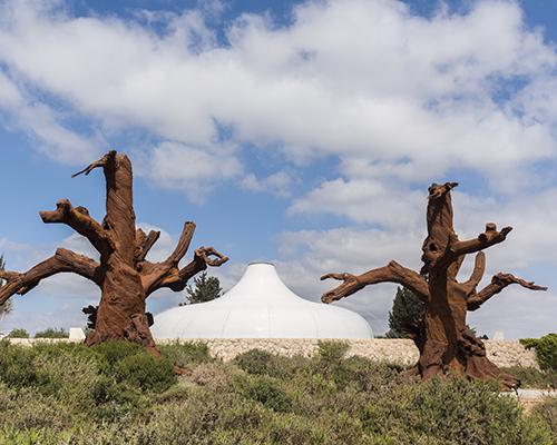 """以色列博物馆周围长出了""""铁树"""""""