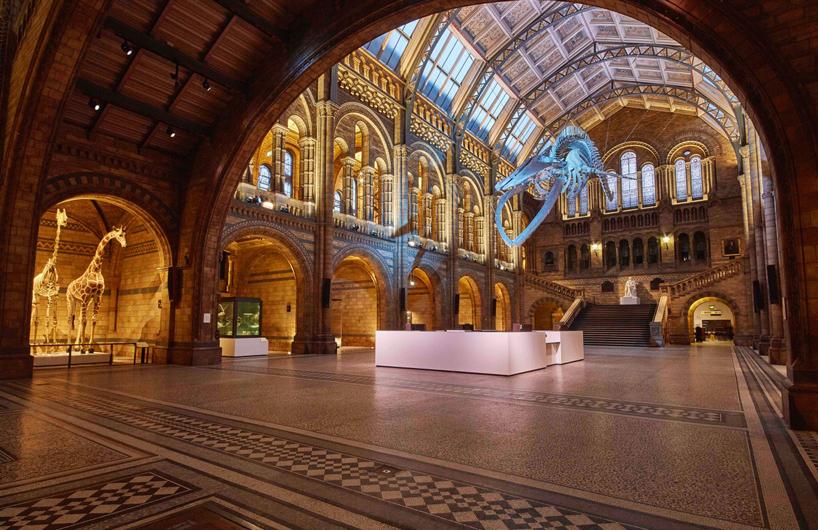 伦敦的自然历史博物馆揭开蓝鲸骨架的面纱