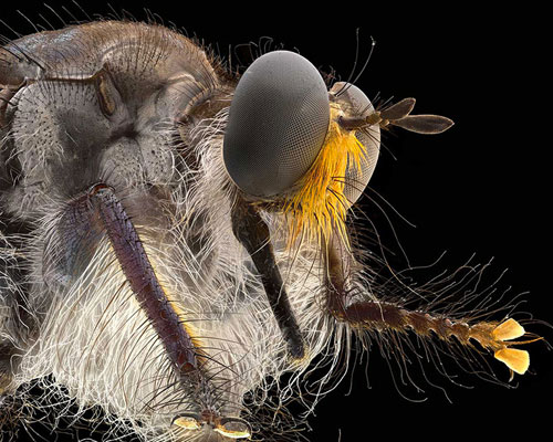 ALPA 新镜头macro switar 105 mm  捕捉昆虫微细节