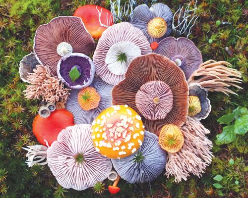太平洋小岛上神奇的蘑菇群