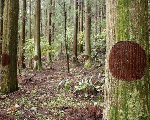 艺术家在树木上画圈圈