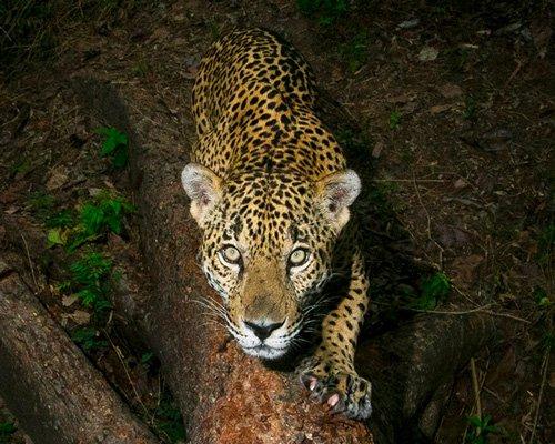 年度野生动物摄影大赛揭示了大自然的美丽