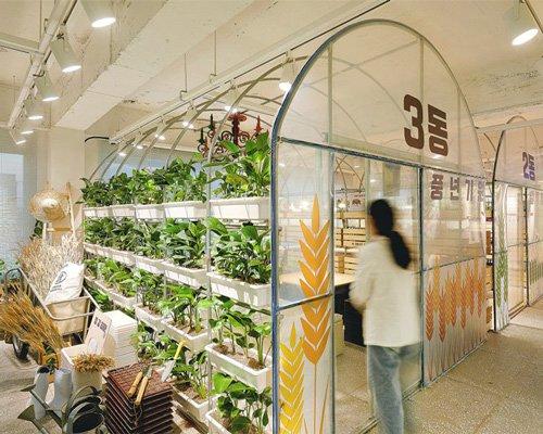 温室中的工作室 做设计好比种庄稼