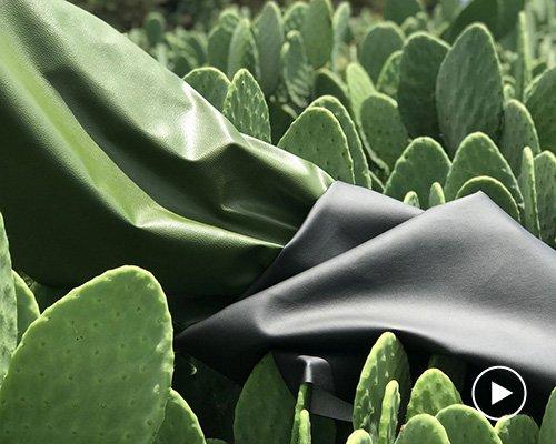 用仙人掌制成的人造皮革desserto